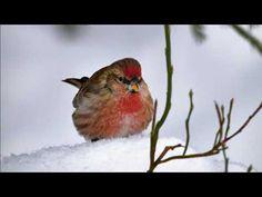 Urpiainen Bird, Animals, Animales, Animaux, Birds, Animal, Animais