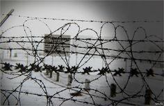 hearts of barbed wire at the border