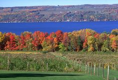Finger Lakes, NY - Indulge in wine tours, peaceful views and unique experiences when you plan your visit to Finger Lakes Wine Country, New York, the most beautiful and affordable wine country destination in the world. Weekender, Seneca Lake, Seneca Falls, Weekend Trips, Long Weekend, Lake George Village, Summer Vacation Spots, Finger Lakes, Upstate New York