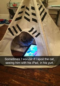 Everyone loves animals and pets, and cats are the funniest animals! They make us laugh and happy! Just look how all these cats & kittens play, fail, get Funny Animal Pictures, Cute Funny Animals, Funny Cute, Cute Cats, Funny Pics, Hilarious Photos, Silly Cats, I Love Cats, Humorous Cats
