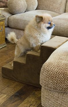Our sturdy Animal Matters ® Indoor Pet Stairs help your animals reach new heights. Give your dog or cat easy access to beds, couches, and vehicles with these handsome, upholstered pet steps.