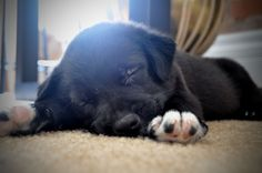 Frank! My new puppy :)