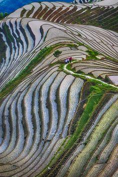 Longji Rice Terraces, China    In China? try www.importedFun.com for Award Winning Kid's Science  