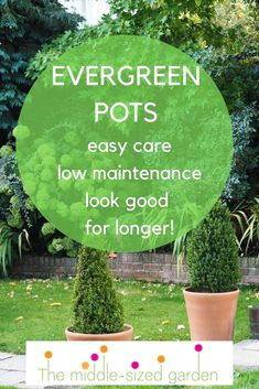 Container garden ideas for evergreen pots and outdoor planters. They're easy care contemporary and look good for longer! Container garden ideas for evergreen pots and outdoor planters. They're easy care contemporary and look good for longer! Evergreen Planters, Outdoor Planters, Evergreen Container, Winter Container Gardening, Container Gardening Vegetables, Free Plants, Cool Plants, Easy Garden, Garden Ideas