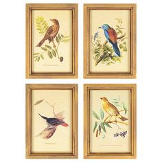 Birds Framed Art Print, Set of 4 $40