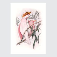 Plakat Ilustracja Vintage Kakadu