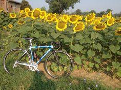 #PersonalTrainer #Bologna #ciclismo #bici #Colnago