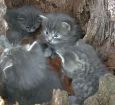 Image detail for -feral cats