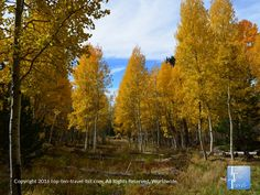 The Aspen Nature Loop in #Flagstaff is one of the most stunning fall foliage trails in the area. Check out all these gorgeous fall colors!
