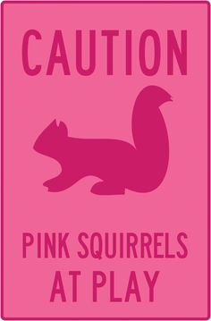 1000 Images About The Pink Squirrel On Pinterest