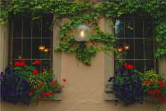 Ivy, Lamp, Flower Boxes