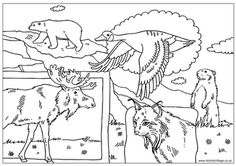 Perfect for Canada Day or any time you want to celebrate Canada, our colouring page features a collection of Canadian animals. Summer Coloring Pages, Flag Coloring Pages, Online Coloring Pages, Animal Coloring Pages, Coloring Books, Coloring Sheets, Kids Coloring, Free Coloring, Canadian Animals