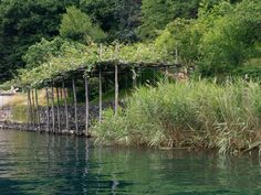 One day on Lake Orta Vineyard, Day, Outdoor, Outdoors, Vine Yard, Vineyard Vines, Outdoor Living, Garden