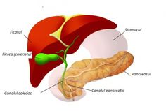 Help the gallbladder and liver! Bile Duct, Surgery, Medicine, Health, Study Tips, Avatar, Household, Hands, Sign