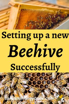 Setting up your first beehive can be a bit intimidating but you can do it! Check out these tips for setting up a new hive of bees. #caroliahoneybees