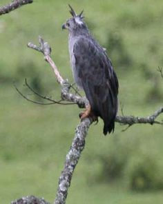 rare birds - Bing Images