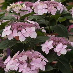 Must-Grow New Shrubs, Trees, and Vines for 2014