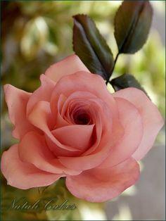 Rosa gum paste by Natali Cakes, via Flickr Sugar Paste Flowers, Icing Flowers, Fondant Flowers, Clay Flowers, Ceramic Flowers, Paper Flowers, Flower Cake Design, Ronsard Rose, Sugar Rose