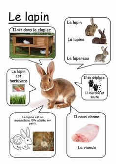 Printable page about le lapin French Teacher, Teaching French, How To Speak French, Learn French, Farm Animals, Animals And Pets, Rabbit Farm, French Education, Farm Theme