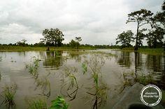 Bootsfahrt auf den Bayous von Louisiana #ebookers