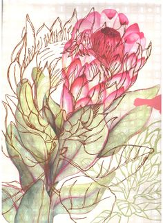 Protea - The genus Protea was named in 1735 by Carl Linnaeus after the Greek god Proteus, who could change his form at will, because they have such a wide variety of forms. Protea Art, Protea Flower, Art And Illustration, Illustrations, Art Floral, Nature Sketch, Flower Sketches, Design Seeds, Texture Art