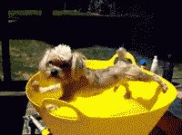 Image of a dog stuck in a bucket (b0red via Reddit)