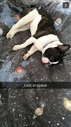 Bost in space | Boston Terrier Friendzy