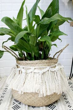 Green thumb seagrass fringe basket Macrame plant pot