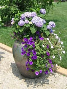 A garden of purples hydrangeas and other flowers in a container