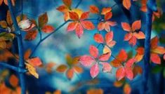 Little Red Leaves New Wallpaper Hd, Tree Wallpaper, Flower Wallpaper, Nature Wallpaper, Leaves Wallpaper, Orange Wallpaper, Galaxy Wallpaper, Autumn Trees, Autumn Leaves