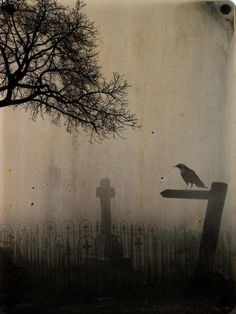 "Raven ""watcher"" in misty cemetery."