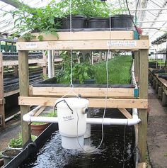 Advantages of Aquaponics System... Aquaponics is referred to as a blend of Aquaculture and Hydroponics. Need more reasons? Here are five advantages that will follow once you start growing foods in Aquaponic system. ~ Gardening ABC