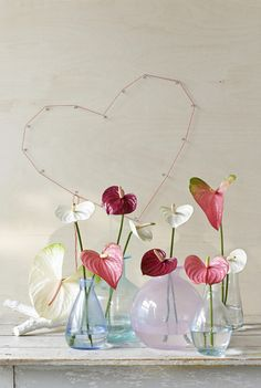 A still life as a declaration of love. It's comes as a surprise to discover that the #Anthurium is the only heart-shaped flower.   Source photo: www.anthurium.info