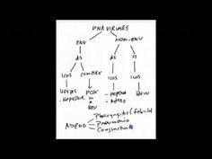 USMLE Step 1 - Classifying DNA & RNA Viruses - YouTube