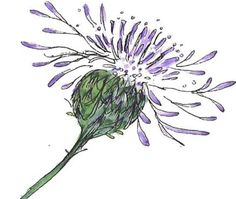 Love this drawing of a thistle!...going to try something like it!