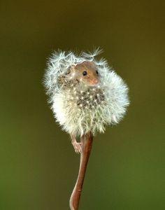 Make a wish...: