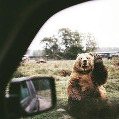 Ver esta foto do Instagram de @frutodanatureza • 2,985 curtidas Goodbye human!!! #animals #bear