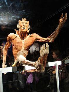 Gunther von Hagens, cadaveri e sculture plastinificati del Dottor Morte