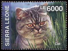 Cat, Postage stamp Sierra Leone, 2014