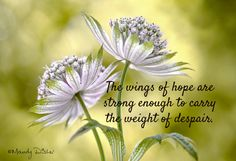The wings of hope are ...