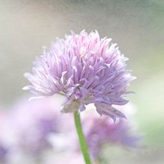 The Purple Bunch by Lital Alkalay on Etsy