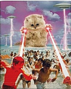 Cats have been famous for hunting mice and rats for as long as cats and people have been together. As strange as it may seem to some people, cats are not born Psychedelic Art, Photomontage, Collages, Art Du Collage, Space Cat, Arte Pop, Grafik Design, Surreal Art, Crazy Cats