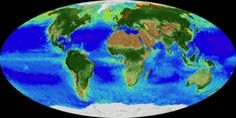 animated visualization of land vegetation and phytoplankton