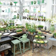 spring bulbs in the potting shed Garden Shop, Gnome Garden, Garden Pots, Home And Garden, Garden Ideas, Potting Sheds, Potting Benches, Greenhouse Gardening, Greenhouse Ideas