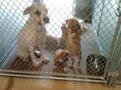 This is HEART BREAKING..how can someone be so heartless to do this to this family? A mom and her 2 puppies were just dumped at the Walton County, FL animal shelter. Please share so they can be saved and live the life they deserve. Shelter's phone number is 850-892-8682.  PLEASE, NEED THIS BEAUTIFUL LITTLE MOM AND HER BABIES OUT OF HERE!!!