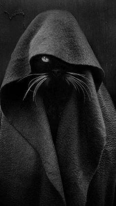 le chat noir de décès