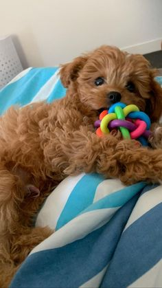 Baby Animals Super Cute, Super Cute Puppies, Cute Little Puppies, Cute Little Animals, Cute Dogs And Puppies, Cute Funny Animals, Baby Dogs, Doggies, Teddy Bear Puppies