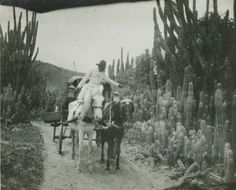 Camino de La Guaira a Caracas. Circa.  Año de 1900-923.