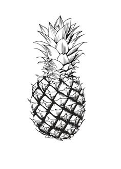 Black-and-white hand drawing of a pineapple in a vector - Buy this stock vector and explore similar vectors at Adobe Stock Pineapple Sketch, Pineapple Drawing, Pineapple Tattoo, Botanical Illustration Black And White, Pineapple Illustration, Sticker Printer, Food Sketch, Plant Tattoo, Exotic Fruit