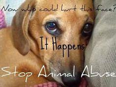 Stop animal abuse.